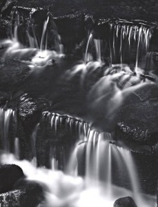 Fern Spring, Dusk, Yosemite Valley, California, about 1962, Ansel Adams