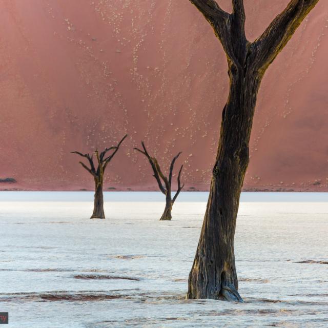 Namibia, Desert, Deadvlei