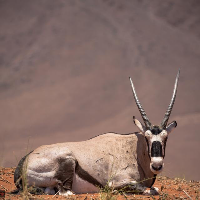 Namibia, Wildlife