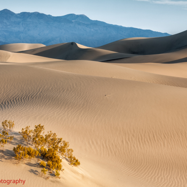 Stovepipe Dunes